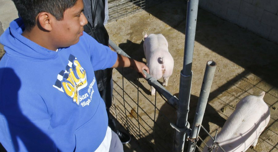 San Pasqual High School Students Pig Waste Project