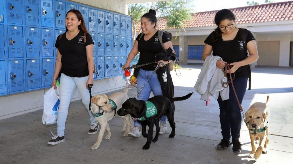 SD Union Tribune: Guide dogs go to puppy class at San Pasqual High School